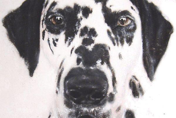 SATH dalmatian